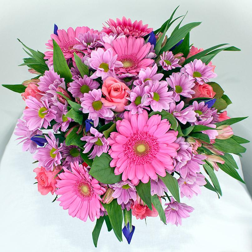 Фото Розовые ромашки