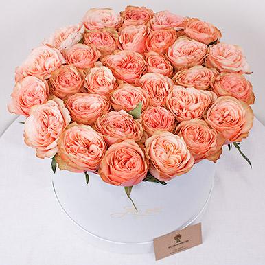 Французская пионовидная роза в большой коробке