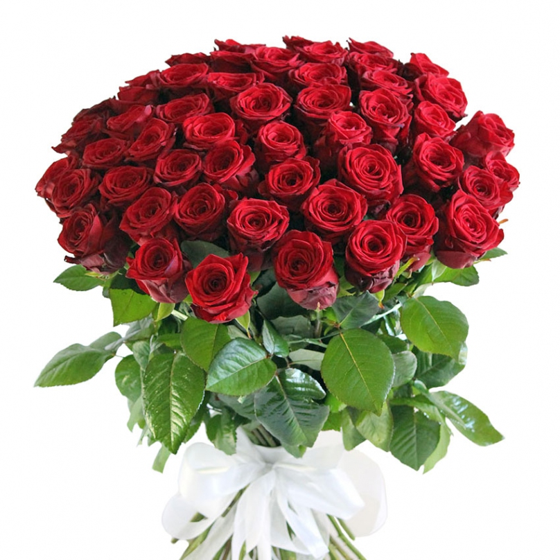 Фото 51 красная роза «Гран-при»
